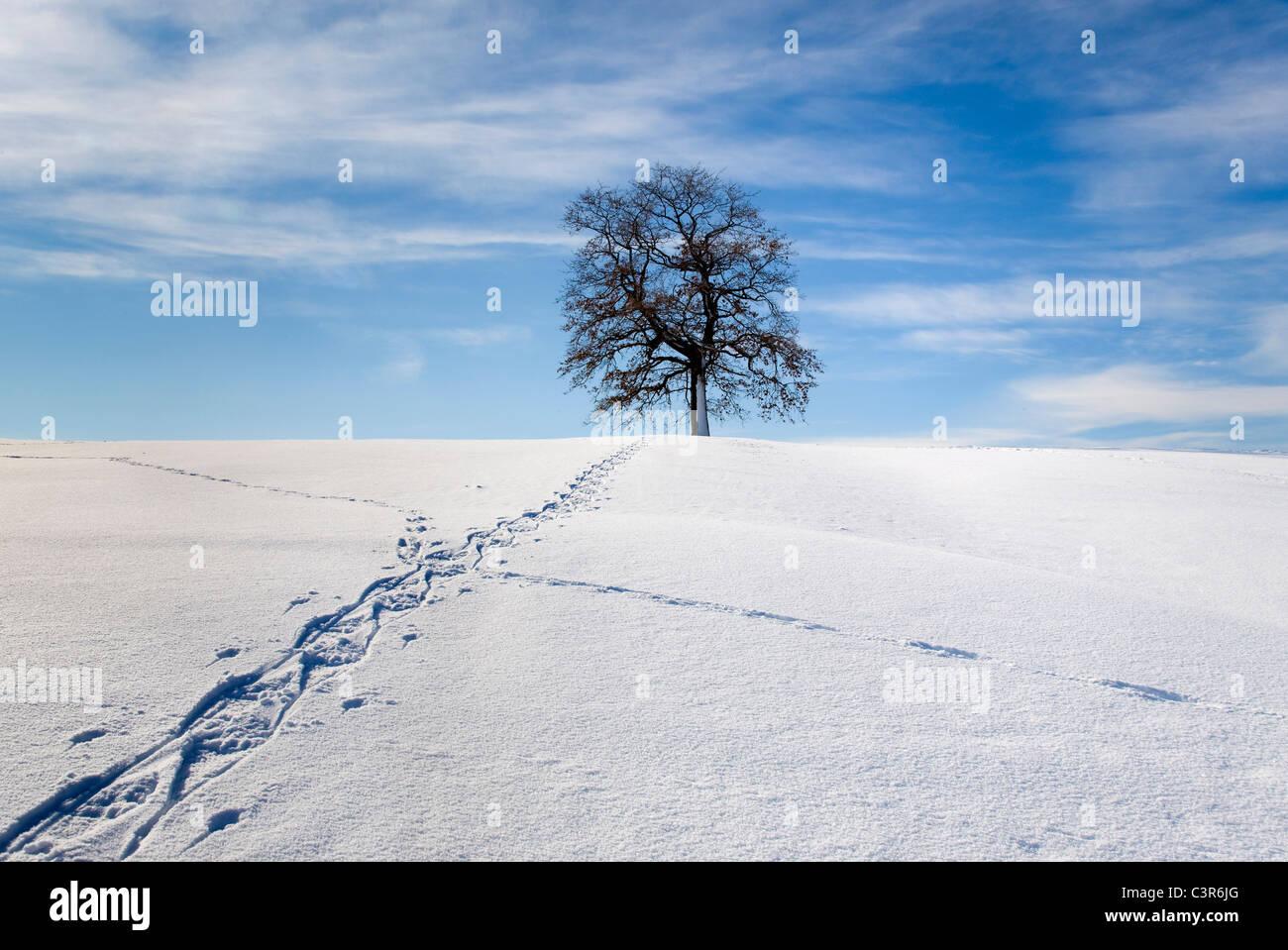 Walking track through winter landscape - Stock Image