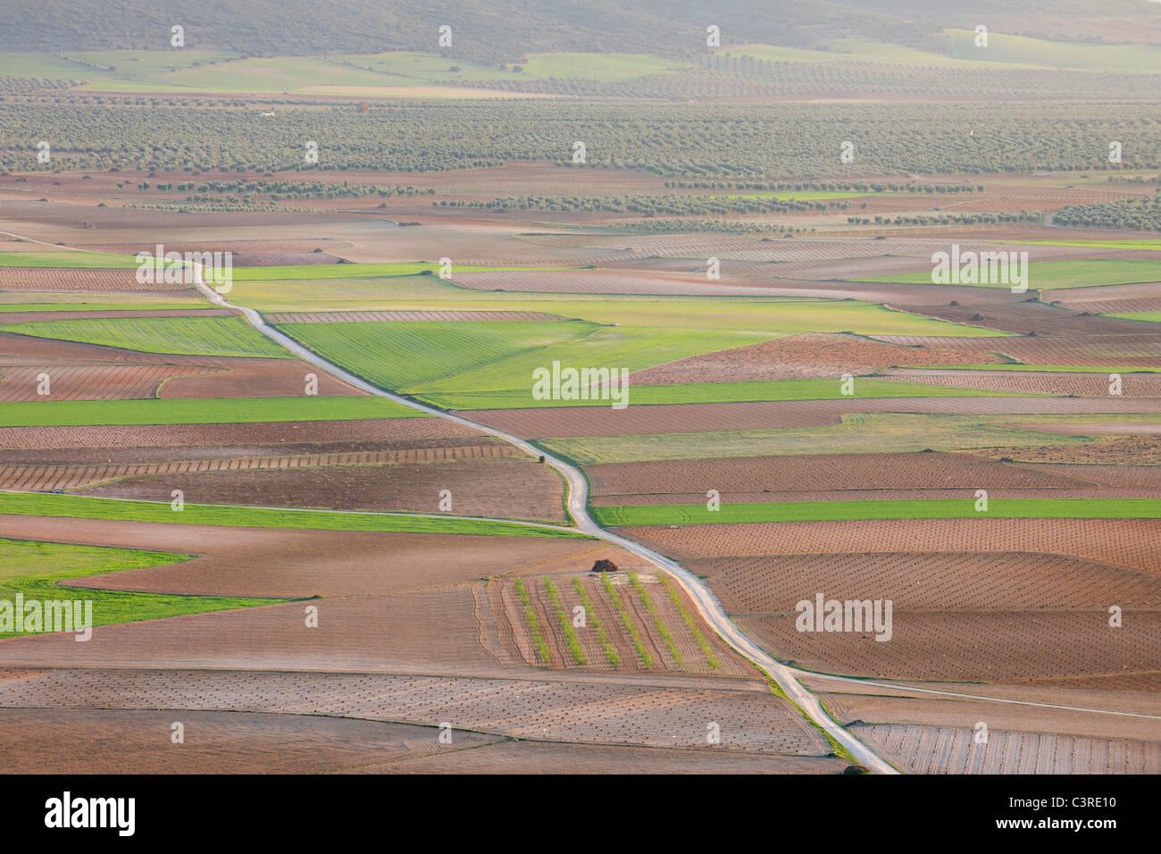 Spain, Castilla-La Mancha, Toledo Province, Consuegra, View of dirt road passing through fields - Stock Image