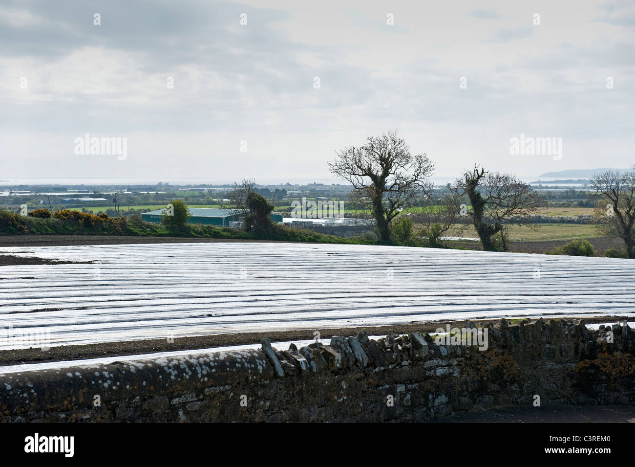 Plastic sheeting covering a field to encourage early growth of potatoes. Near Skerries, county Dublin, Ireland - Stock Image