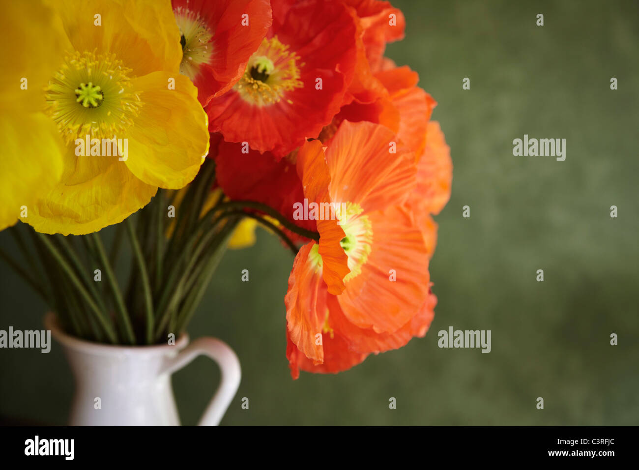 Hamburg, Close up of red and yellow poppy in vase Stock Photo