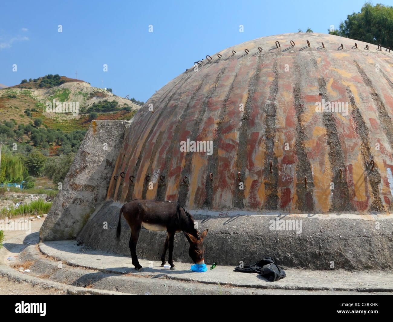 stray donkey feeding on garbage besides huge heavy bunker cone in Albania - Stock Image