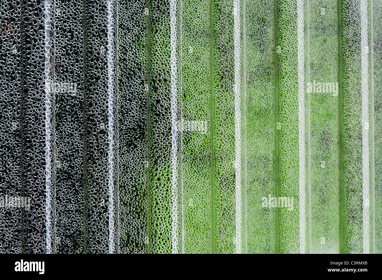 Condensation on a corrugated plastic sheet covering vegetable seedlings - Stock Image