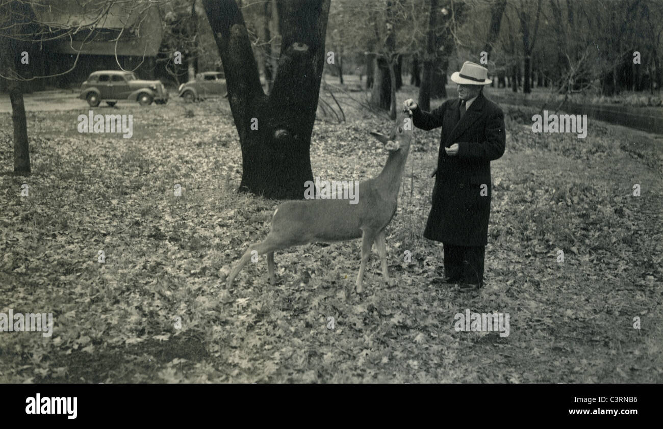 man feeding deer in Yosemite Valley of national park 1940 1940s cars hat fashion black trench coat 1930s fall leaves - Stock Image