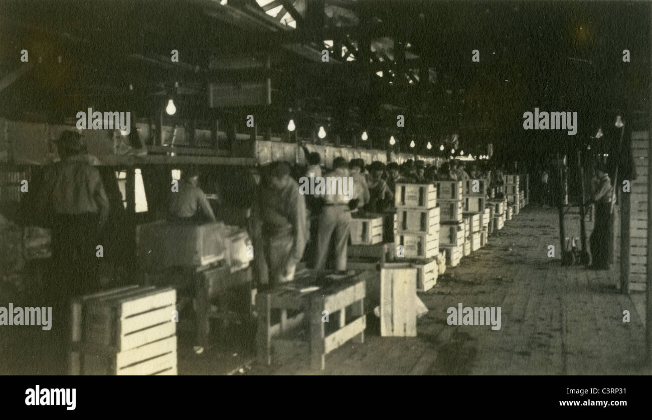 packing lettuce in Arizona during the great depression 1930s house agriculture working class - Stock Image