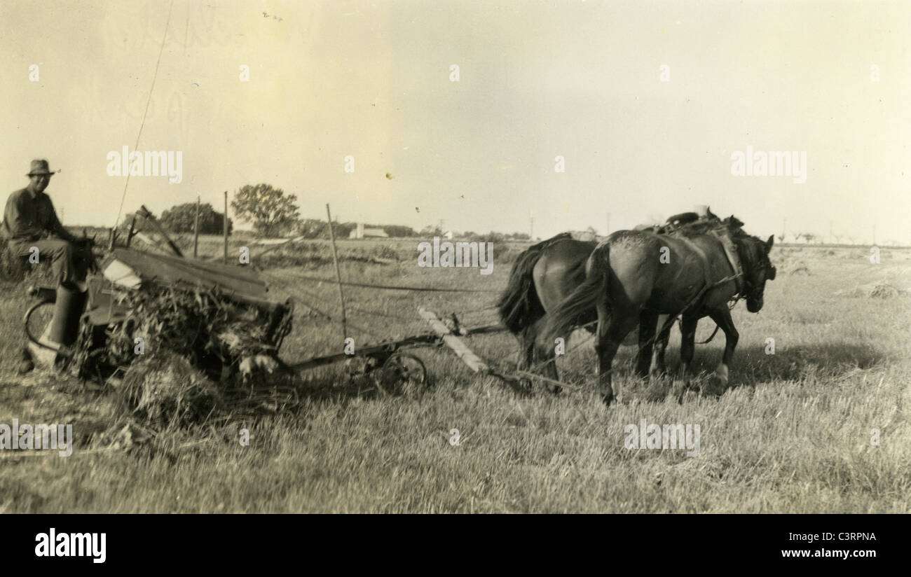 A farmer uses a horse team to work a field on a farm during the 1930s. - Stock Image