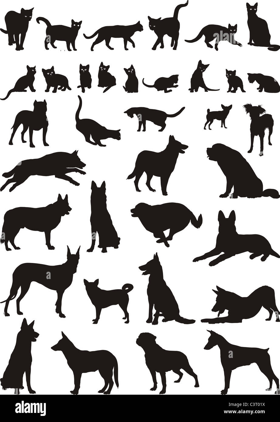 Cats and dogs - Stock Image
