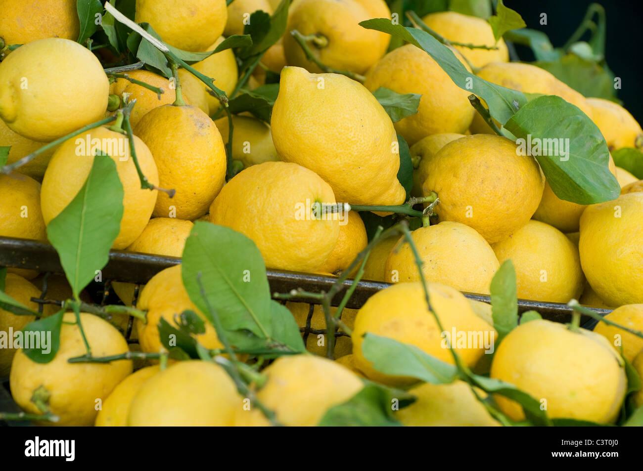 freshly picked organic lemons on market food stall, turin, italy Stock Photo
