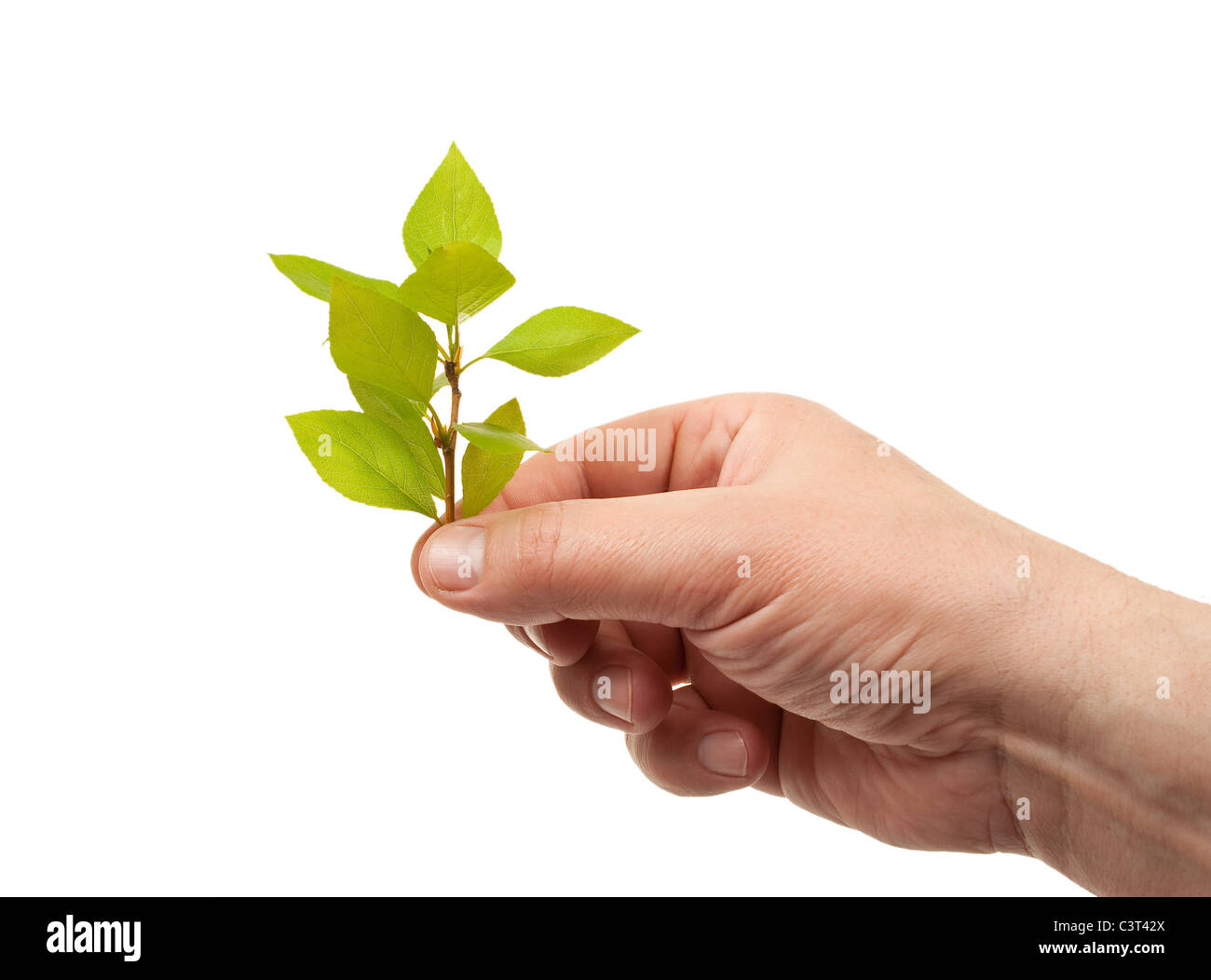 Hand holds a green sprout - Stock Image