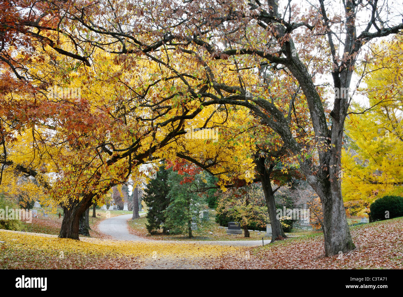 A Canopy Of Blazing Yellow Trees Over A Quiet Cemetery Road In Autumn, Southwestern Ohio, USA - Stock Image