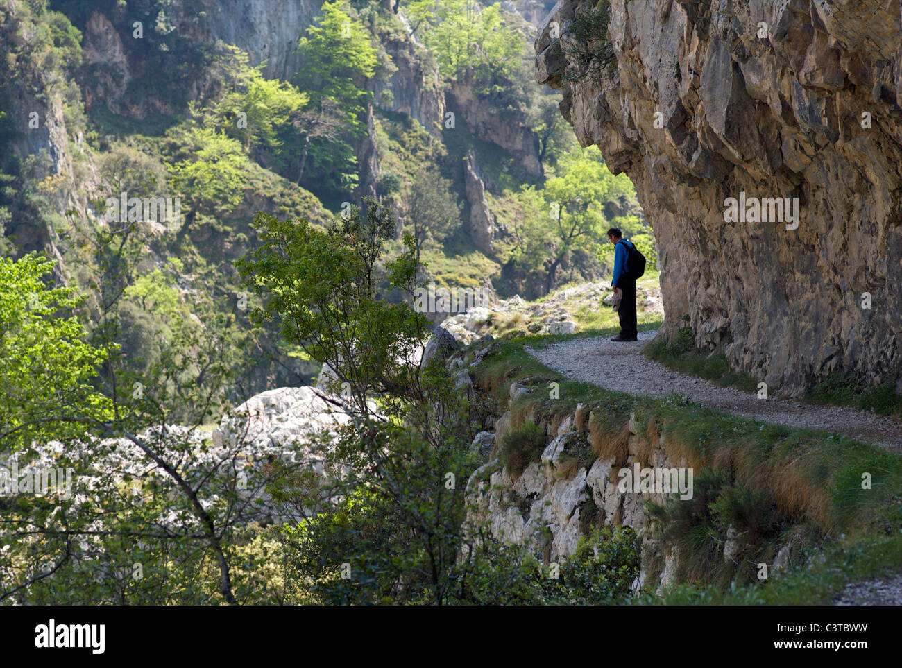 A walker pauses on the Cares Gorge footpath, Picos de Europa, Spain - Stock Image