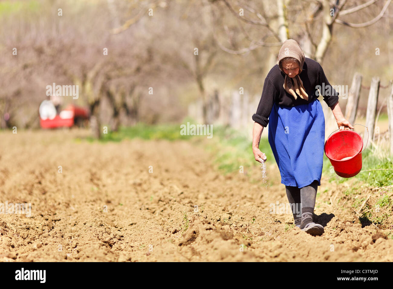Old farmer woman sowing seeds mixed with fertilizer from a bucket - Stock Image