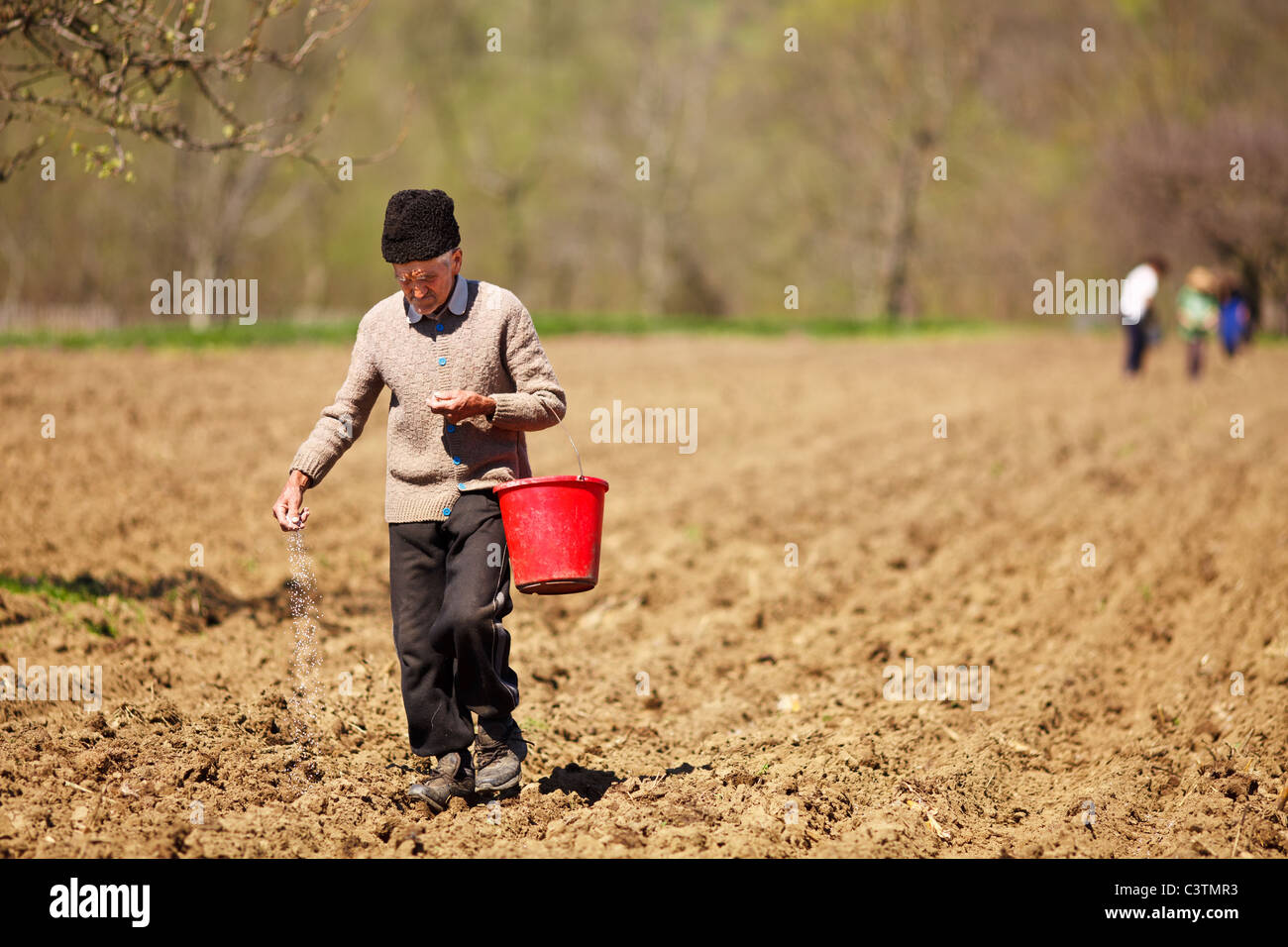 Old farmer sowing seeds mixed with fertilizer from a bucket - Stock Image