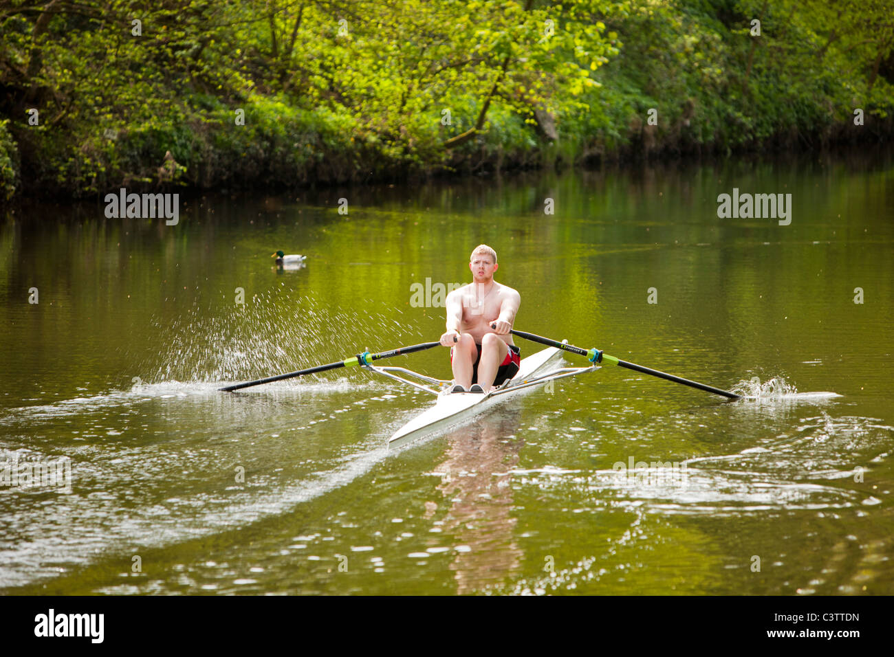 A man in a single skull rowing boat on the River Aire near Saltaire in Yorkshire, UK. - Stock Image