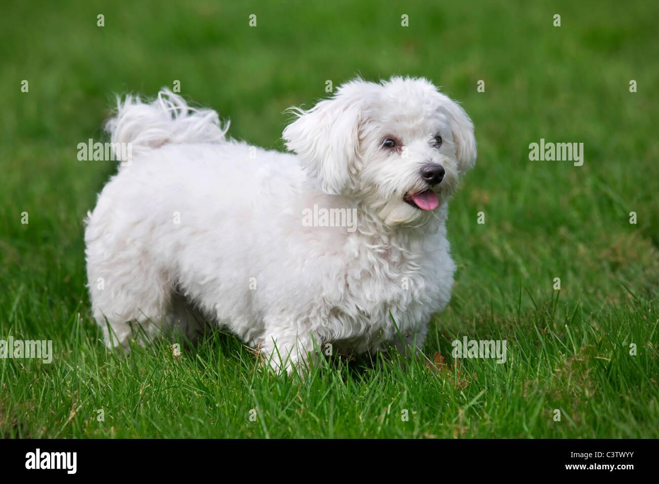 Small Dog Playing Fetch