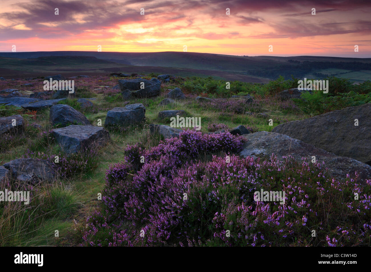 Sun rises over bright purple heather in bloom at Owler Tor near Hathersage in the Peak District of England - Stock Image