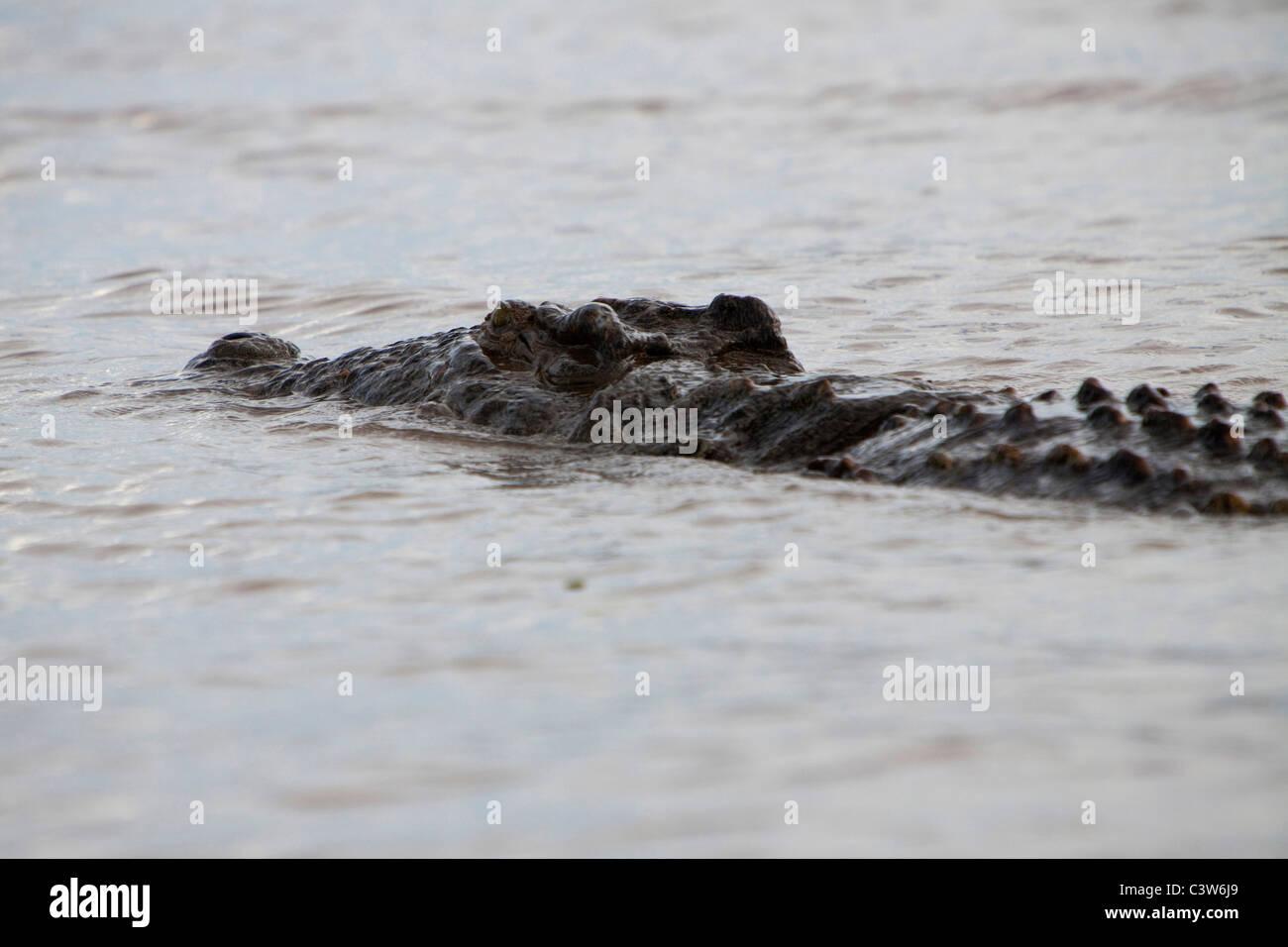 crocodile, lake chamo, ethiopia, africa Stock Photo