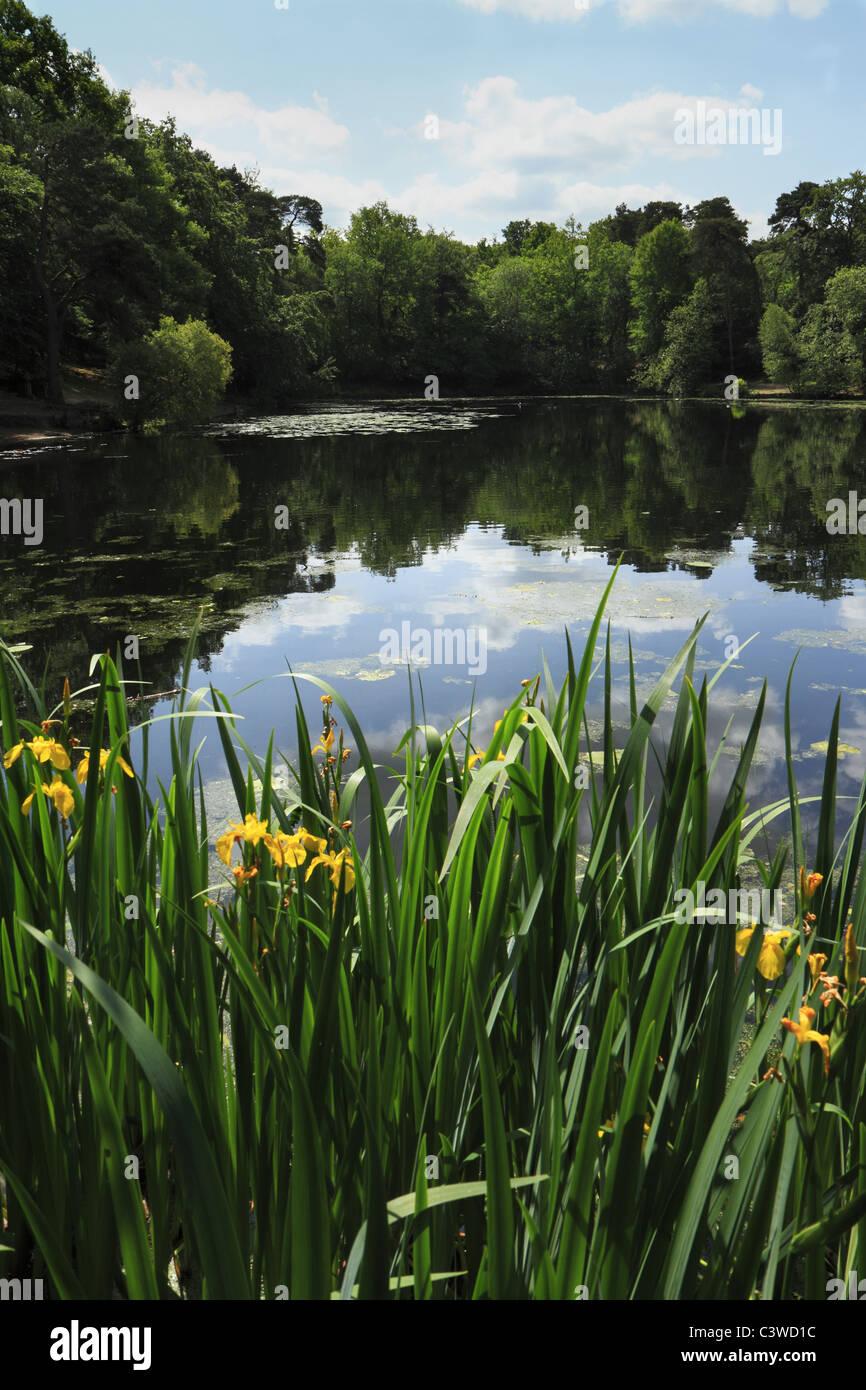 Keston Ponds, Bromley, Kent, UK - Stock Image