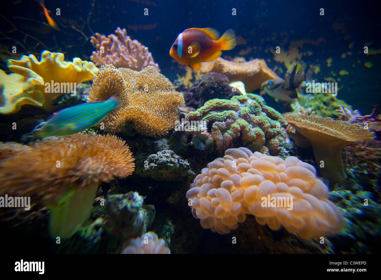 Salt Water Aquarium, Kula Eco Park; Vitu Levu; Fiji - Stock Image