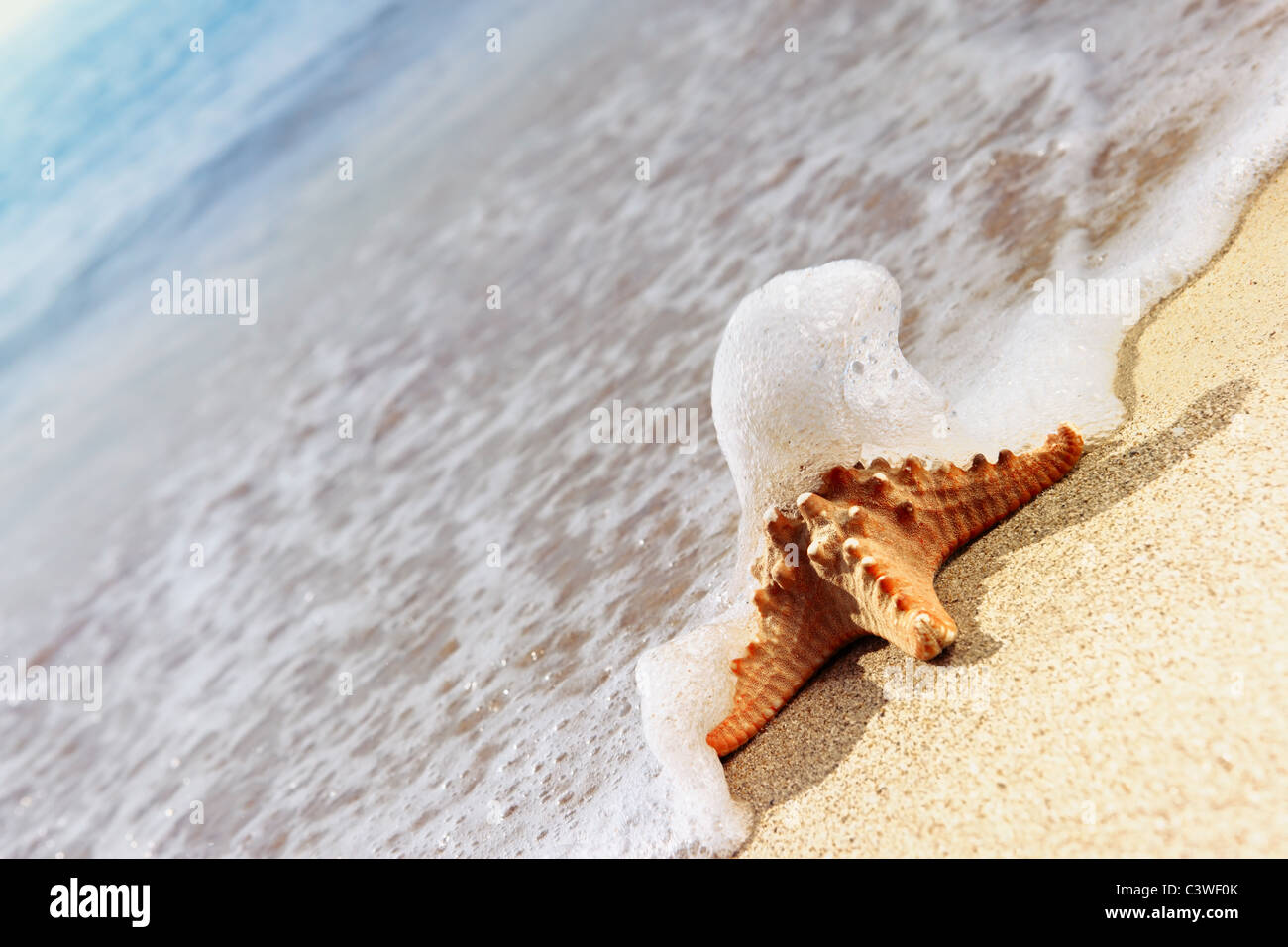 Starfish covered by seawater - Stock Image