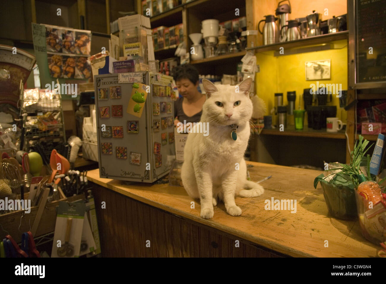 Cat greets customers at the Leaf And Bean specialty tea and coffee shop in Park Slope Brooklyn, NY. - Stock Image
