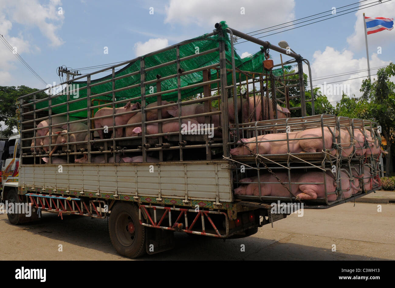Cruelty to animals , pigs in transit at thai-cambodian border between Aranyaprathet, Thailand and Poipet ,Cambodia - Stock Image