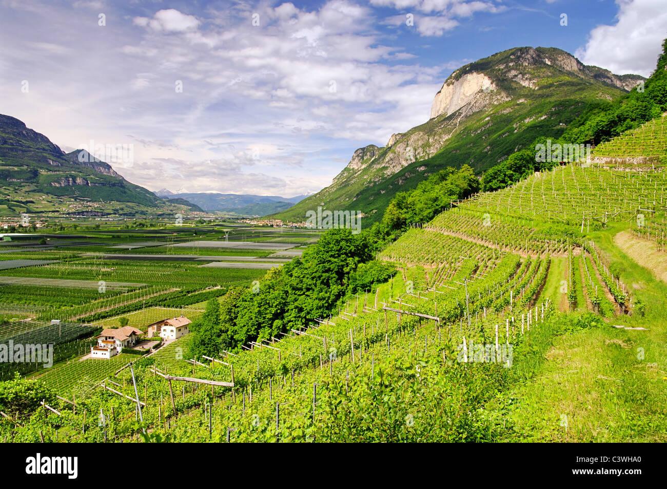Trentino 01 - Stock Image