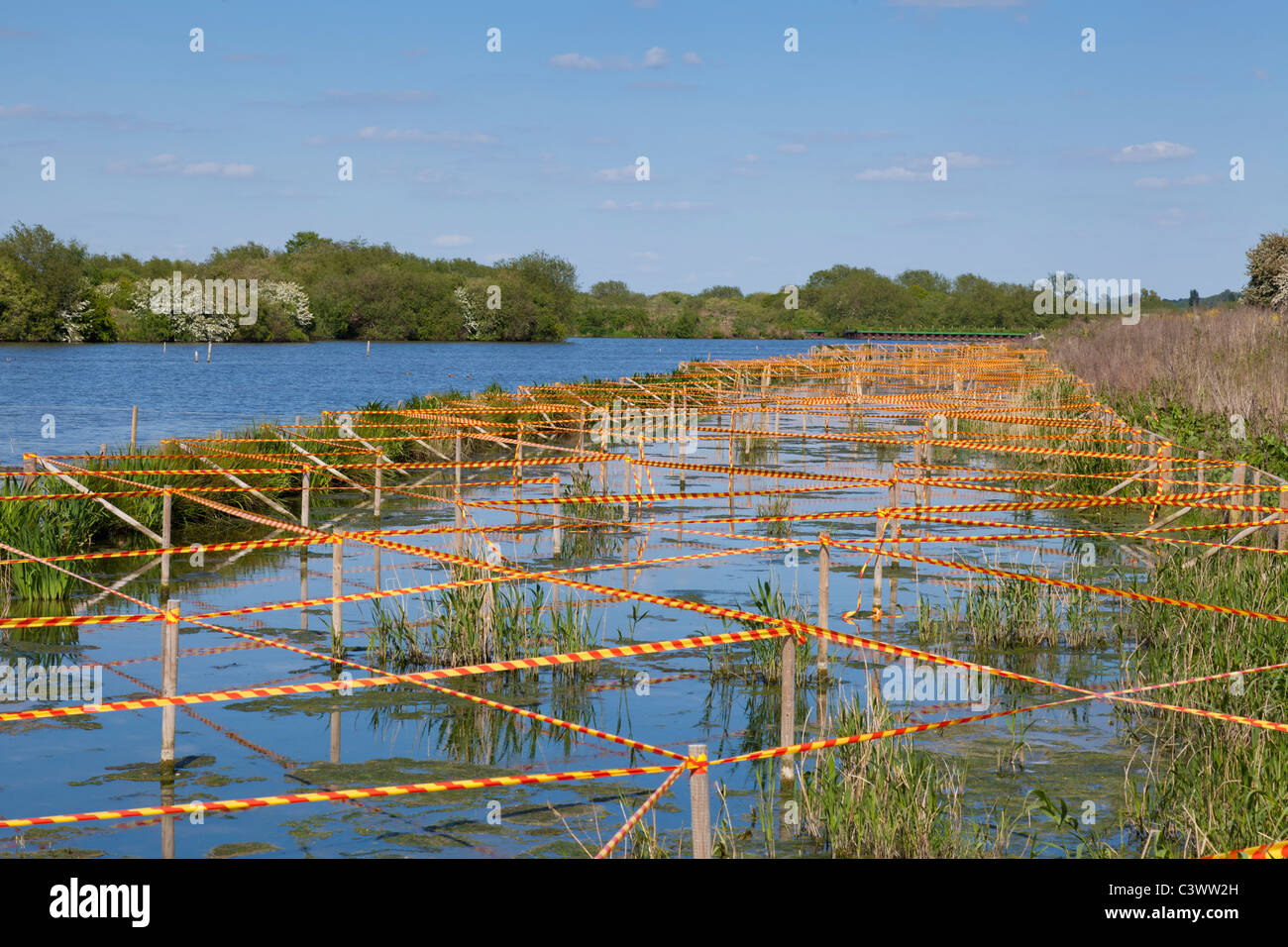 Attenborough Nature reserve creation of new reed beds Nottinghamshire England UK GB EU Europe - Stock Image