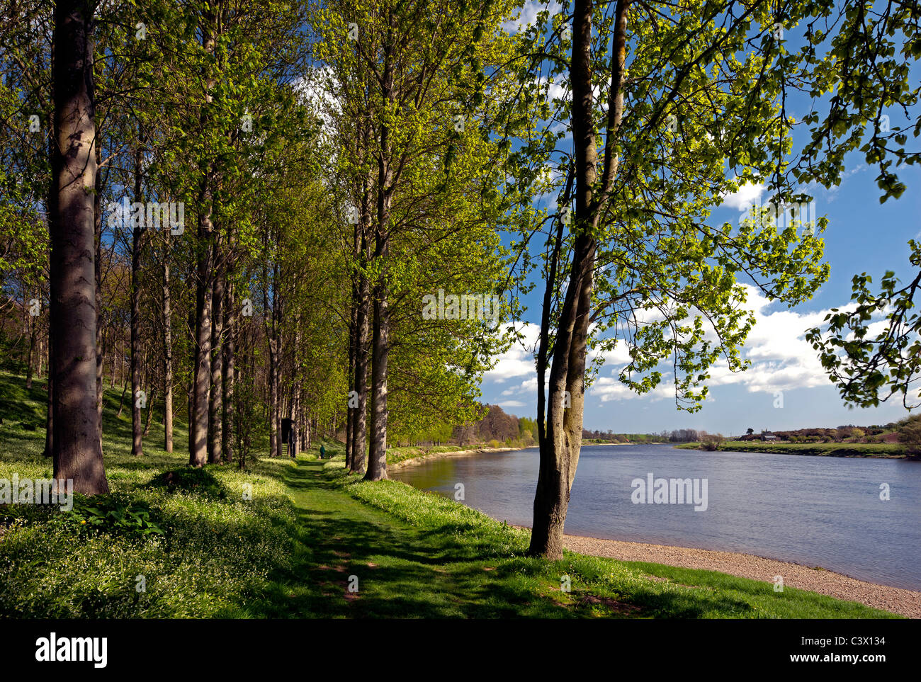 Springtime view along the River Tweed near Paxton House, Berwickshire, Scottish Borders - Stock Image