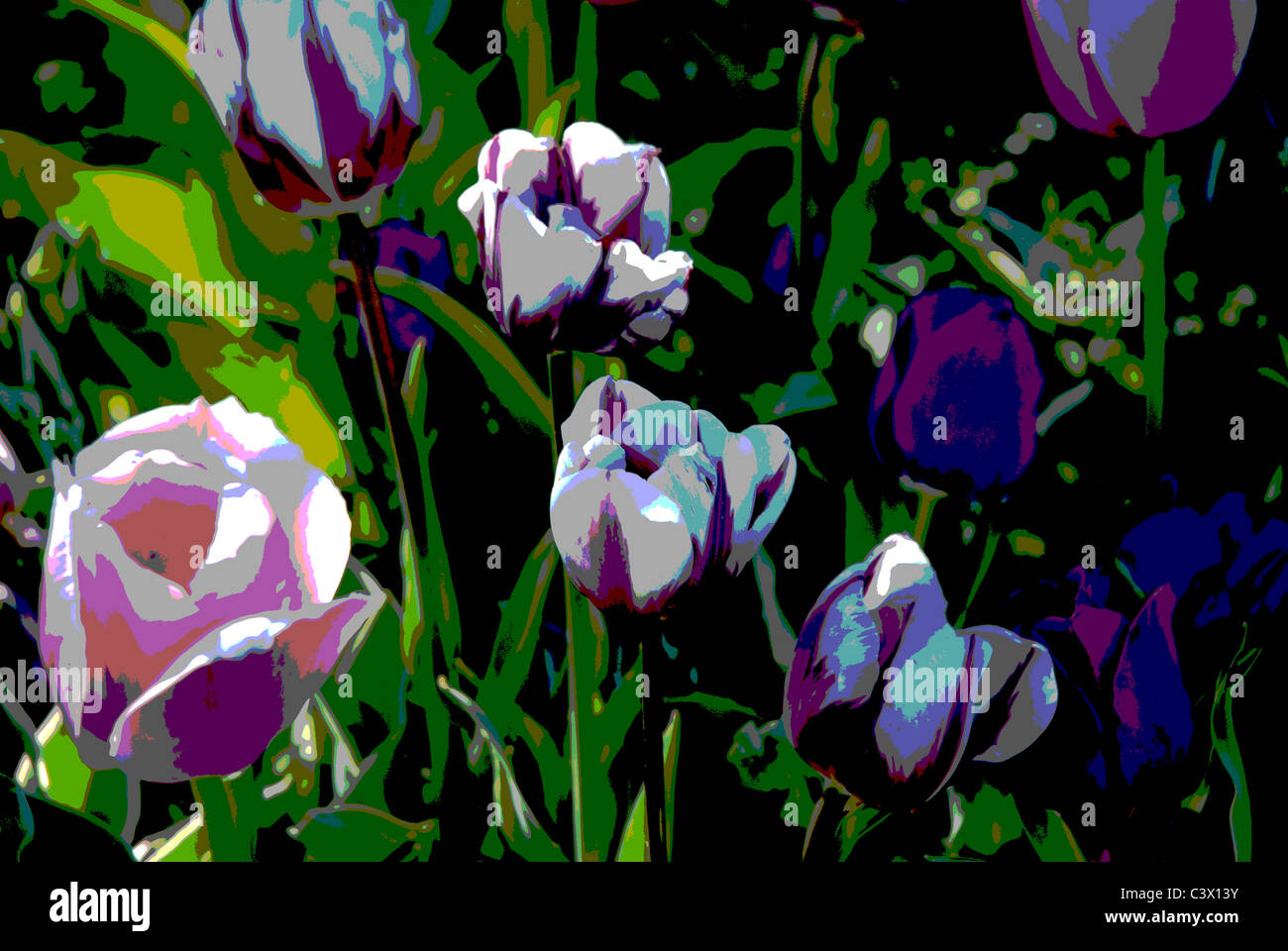 tulips with special effects, posterized in Photoshop - Stock Image