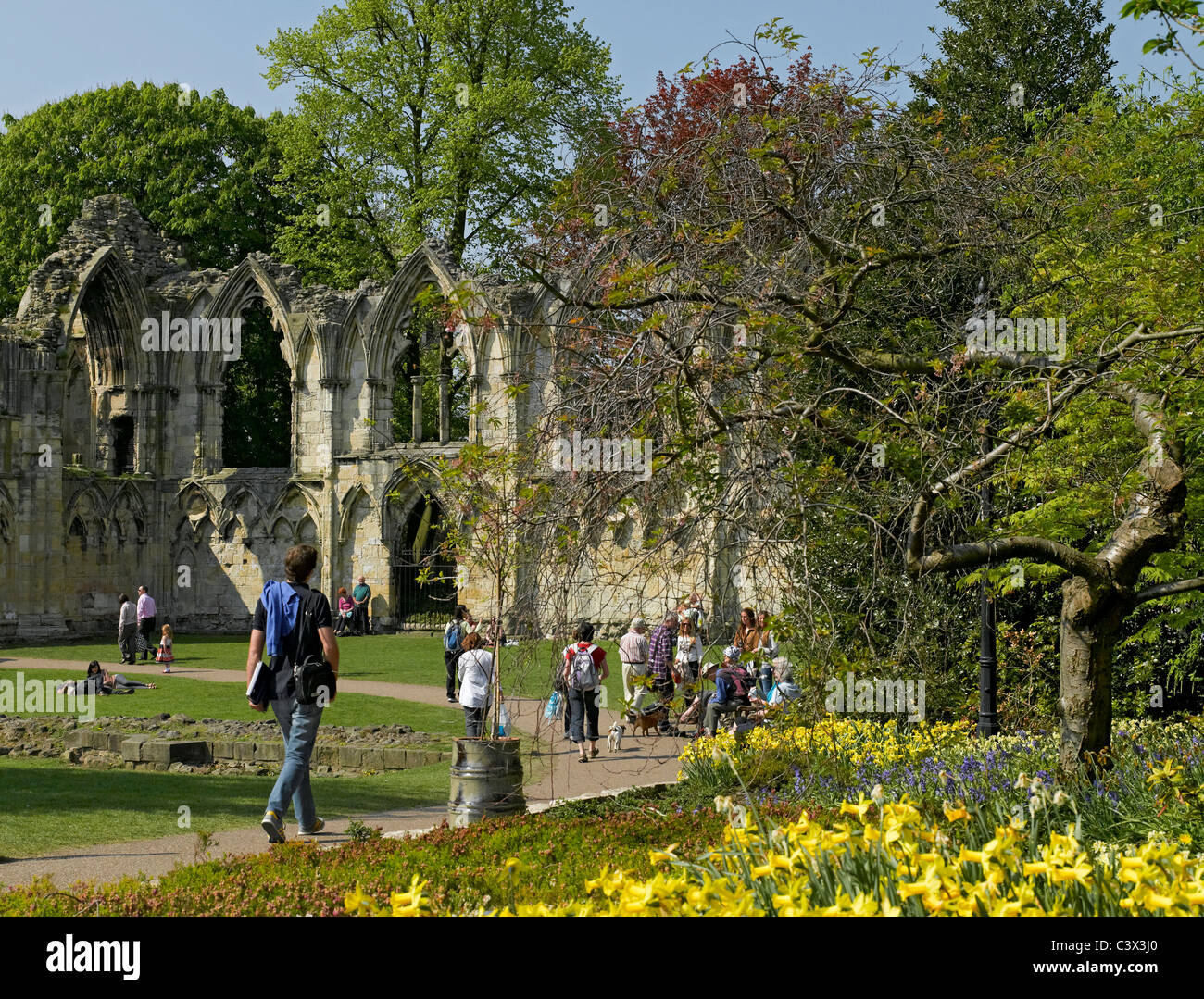 Ruins of St Marys Abbey Museum Gardens York North Yorkshire England ...