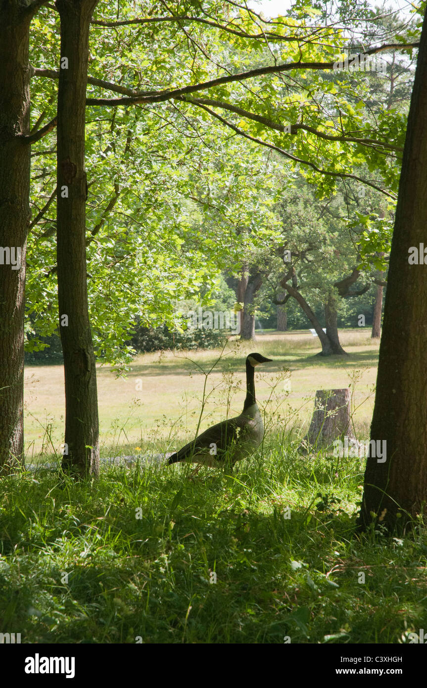 Parc de Bagatelle : A goose in the shade of a tree Stock Photo