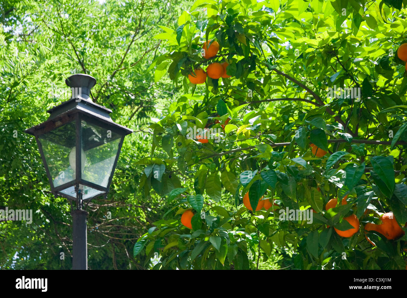 Detail of orange trees and a lamp post in Seville, Spain - Stock Image