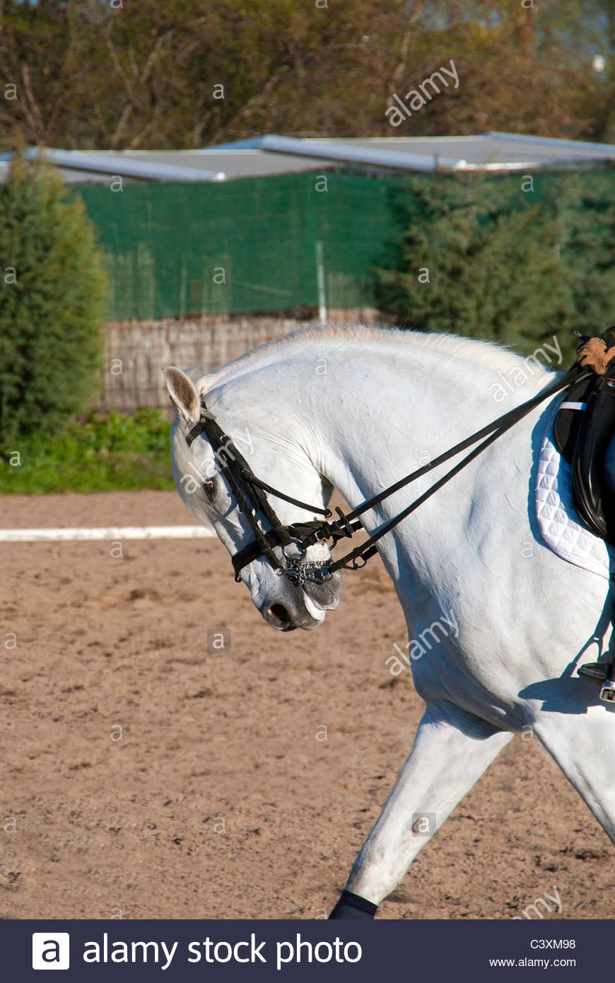 Horse riding. Profile of a white horse - Stock Image