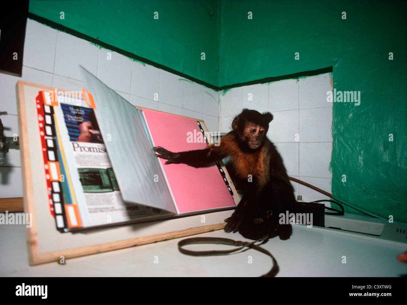 A capuchin monkey turns the page of a book, acting as an assistant for people with physical disabilities.  Tel Aviv, Stock Photo