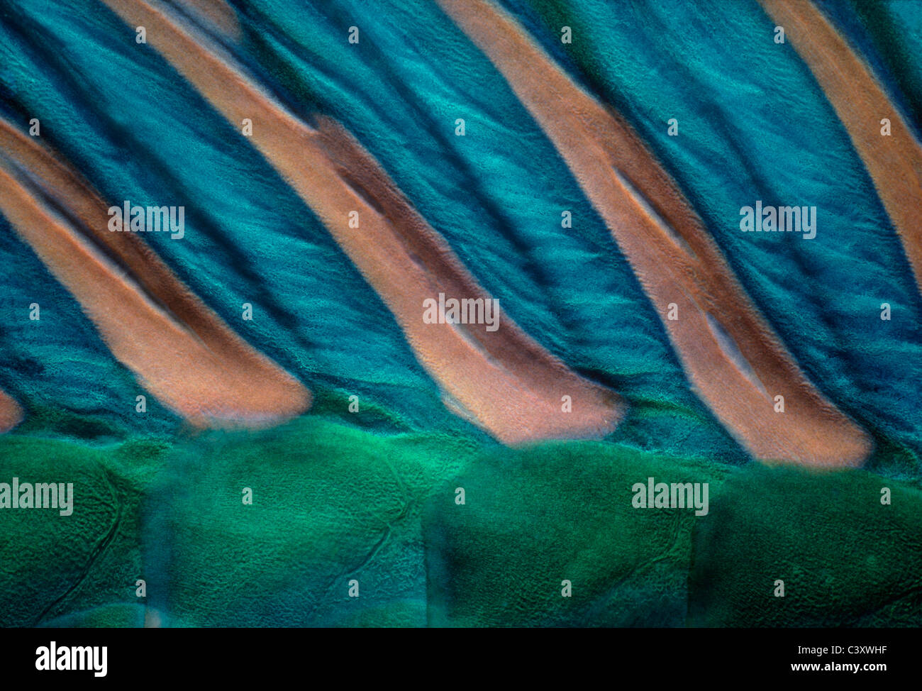 Skin and dorsal spines of Bicolor Parrotfish (Cetoscarus bicolor). Egypt, Red Sea. Stock Photo