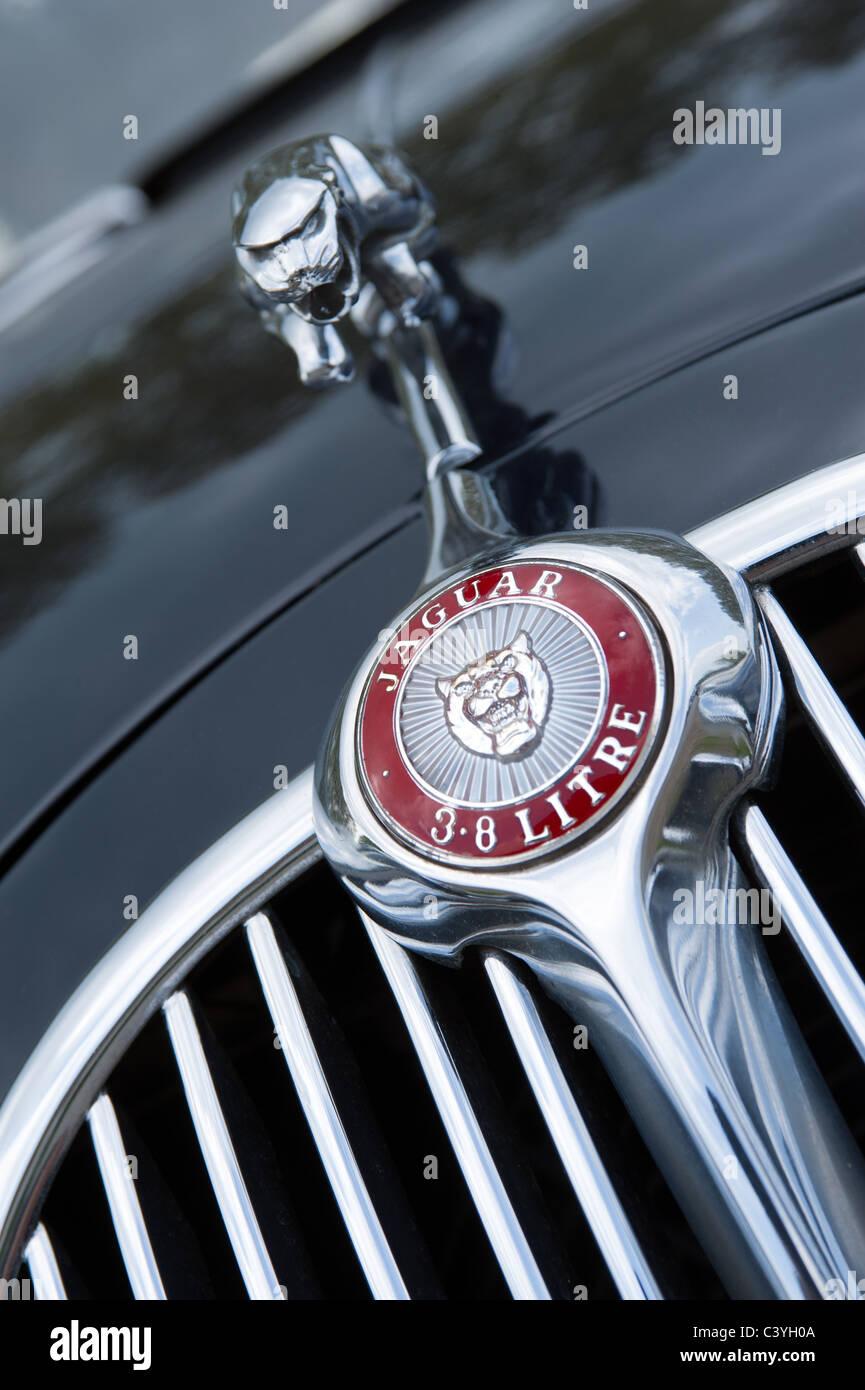Jaguar Mk II 3.8 litre hood / bonnet  grill, ornament and badge detail - Stock Image