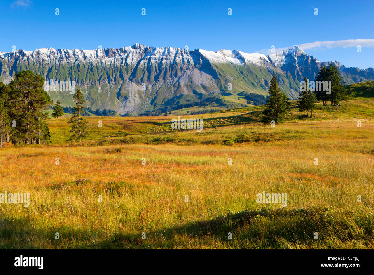 Sorenberg, Switzerland, canton Lucerne, biosphere reserve Entlebuch, high-level moor, trees, mountains, mountain - Stock Image
