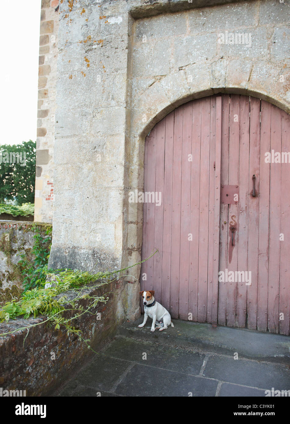 Dog sitting in front of closed doors - Stock Image