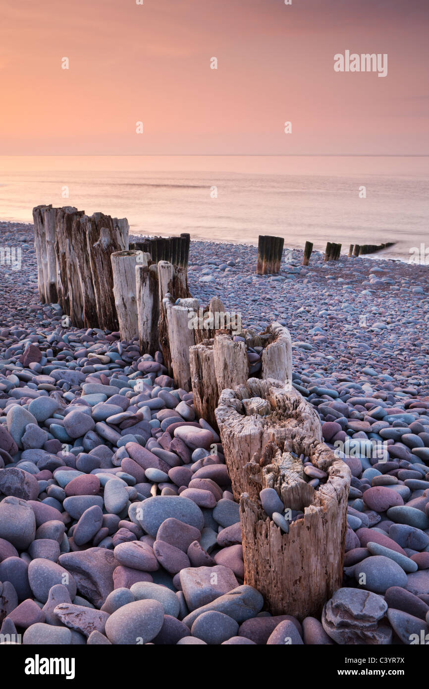 Weathered wooden groyne on Bossington Beach at sunset, Exmoor National Park, Somerset, England. Spring (March) 2011. - Stock Image