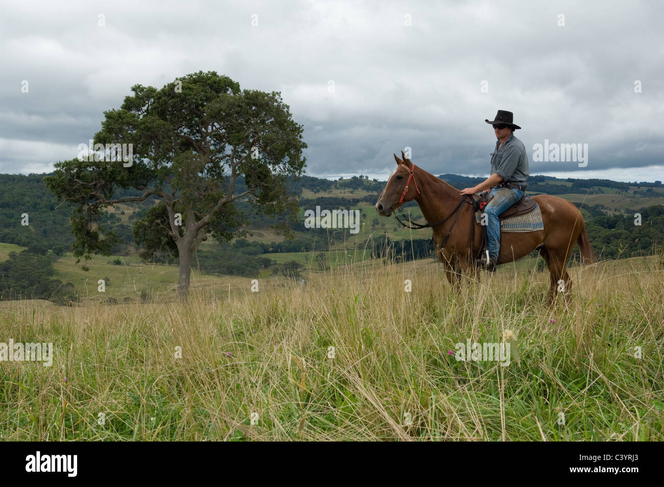 Male rider on horseback in Australia - Stock Image