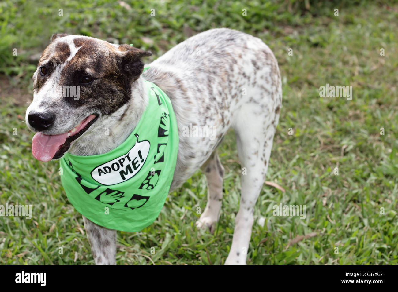 Handicapped Dog, with Adopt Me Sign at an Animal Shelter - Stock Image