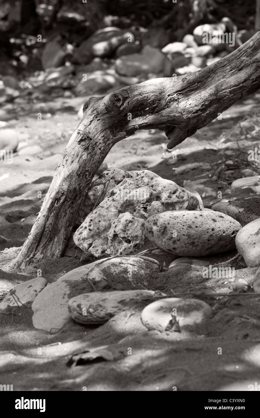 Still life nature image in subtle sepia tones. Taken on a beach in Maui - Stock Image