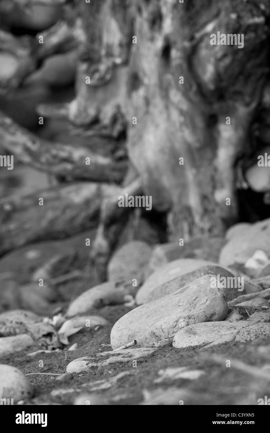 Still life nature image in subtle sepai tones. Taken on a remote beach in Maui. - Stock Image