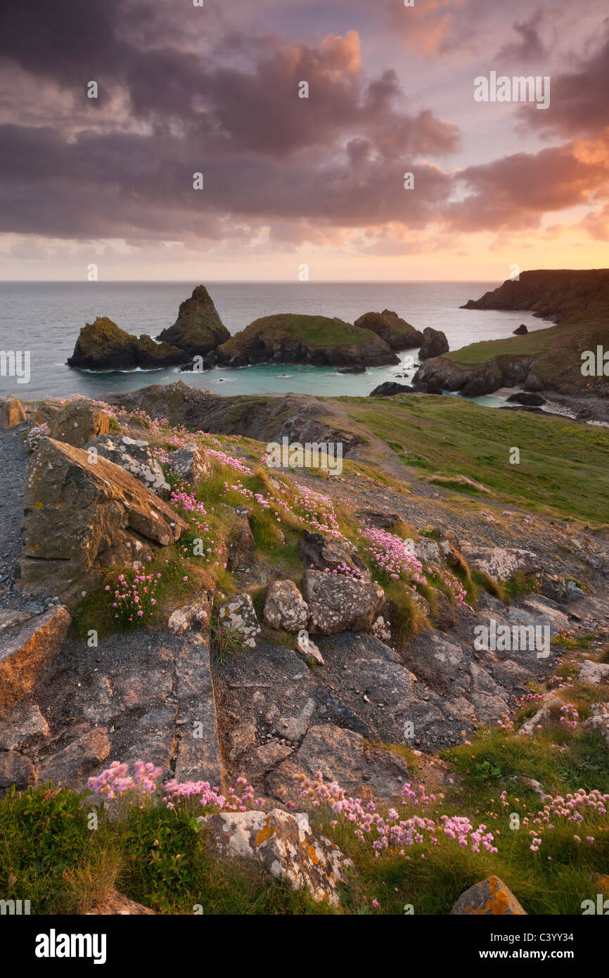 Steps on the South West Coast Path above Kynance Cove, Lizard, Cornwall, England. Spring (May) 2011. - Stock Image
