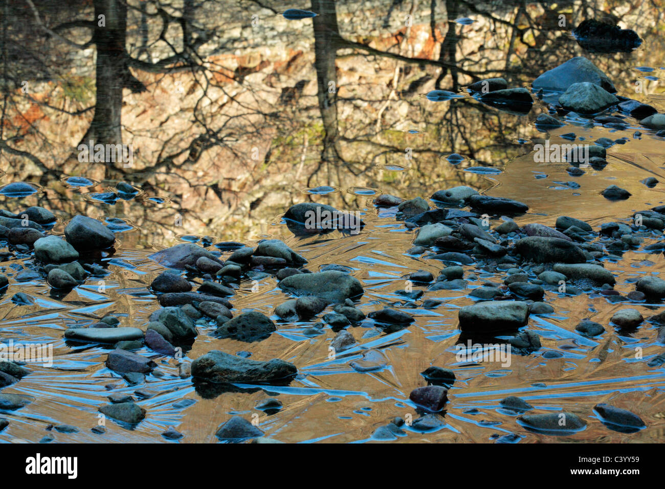 Warm reflection of bare trees in winter mix with the cool tones of rocks and ice in shadow along the shores of the - Stock Image