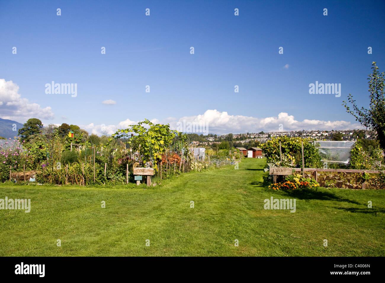 rows of garden plots at suburban community garden colony farm regional park port coquitlam bc canada