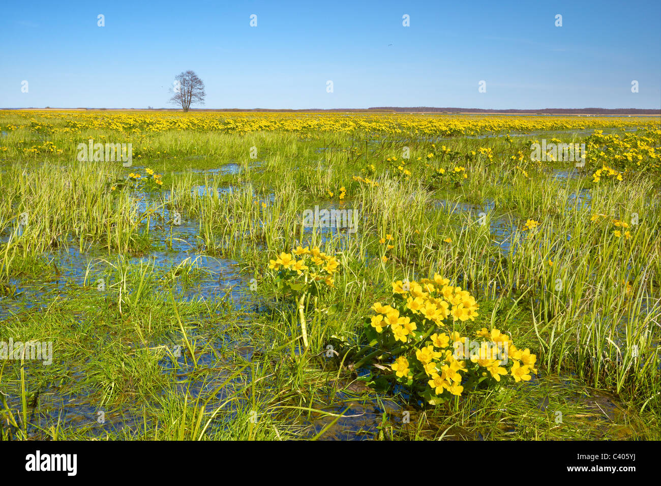 Biebrza National Park, Podlasie region, Poland Stock Photo