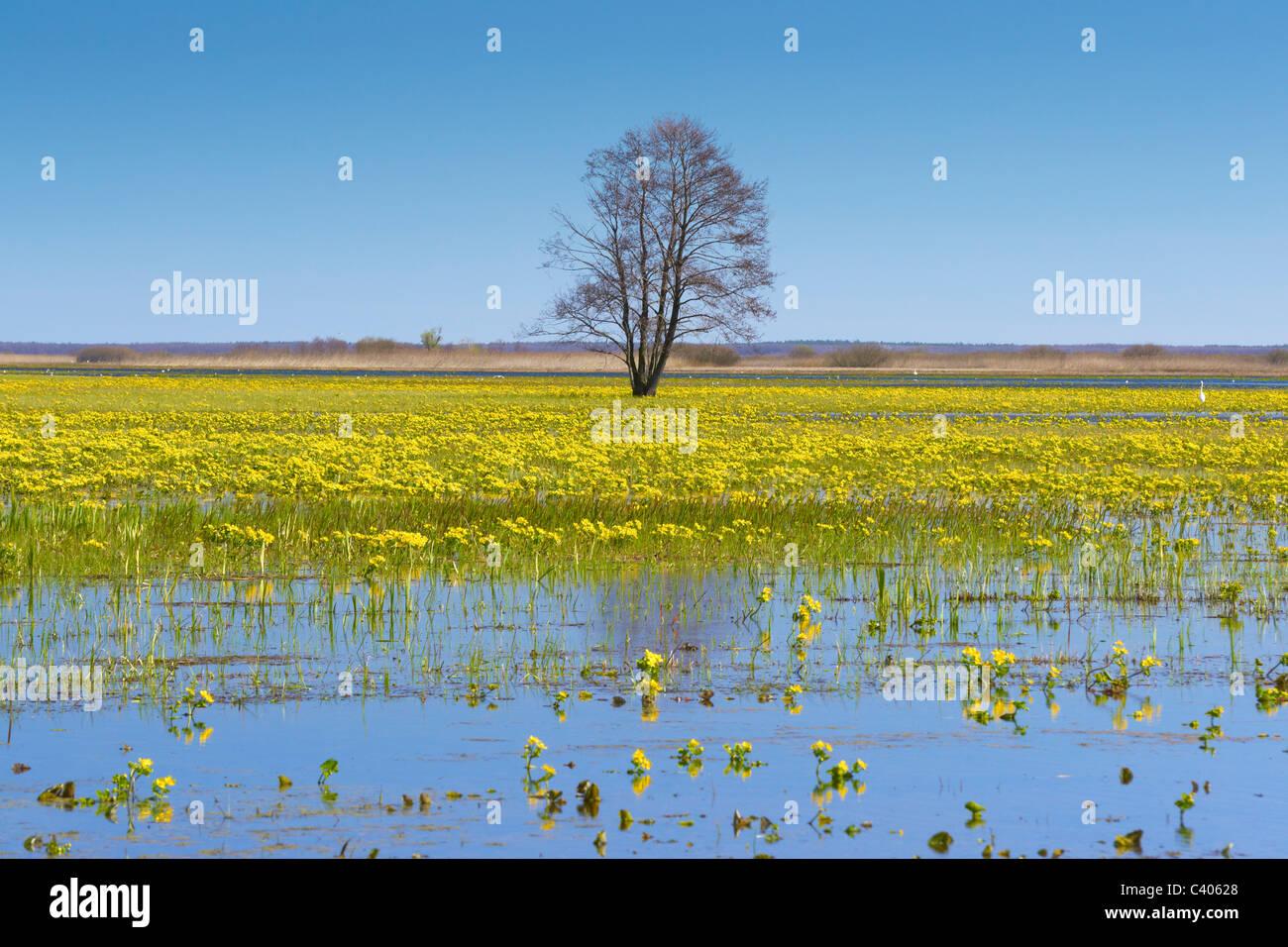 Biebrza National Park, spring landscape, Poland - Stock Image