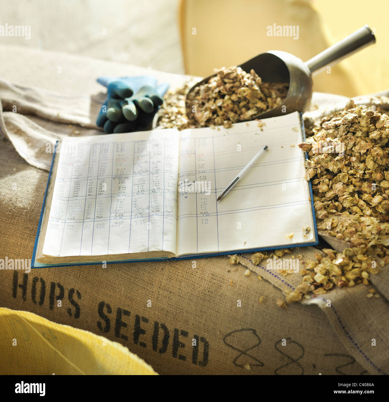 Brewery log and scoop with hops - Stock Image