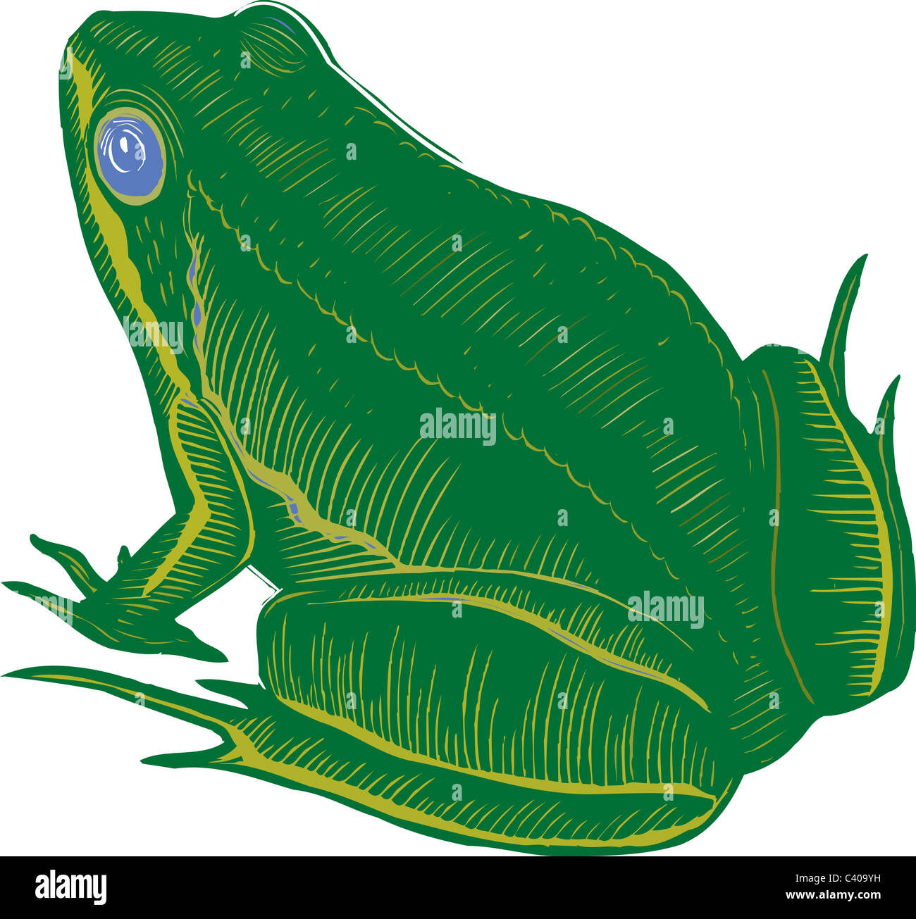 Illustration of a frog - Stock Image